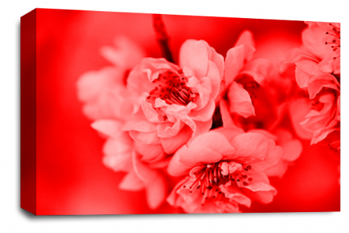 Floral Flower Wall Art Picture Red Grey Spring Blossom Print